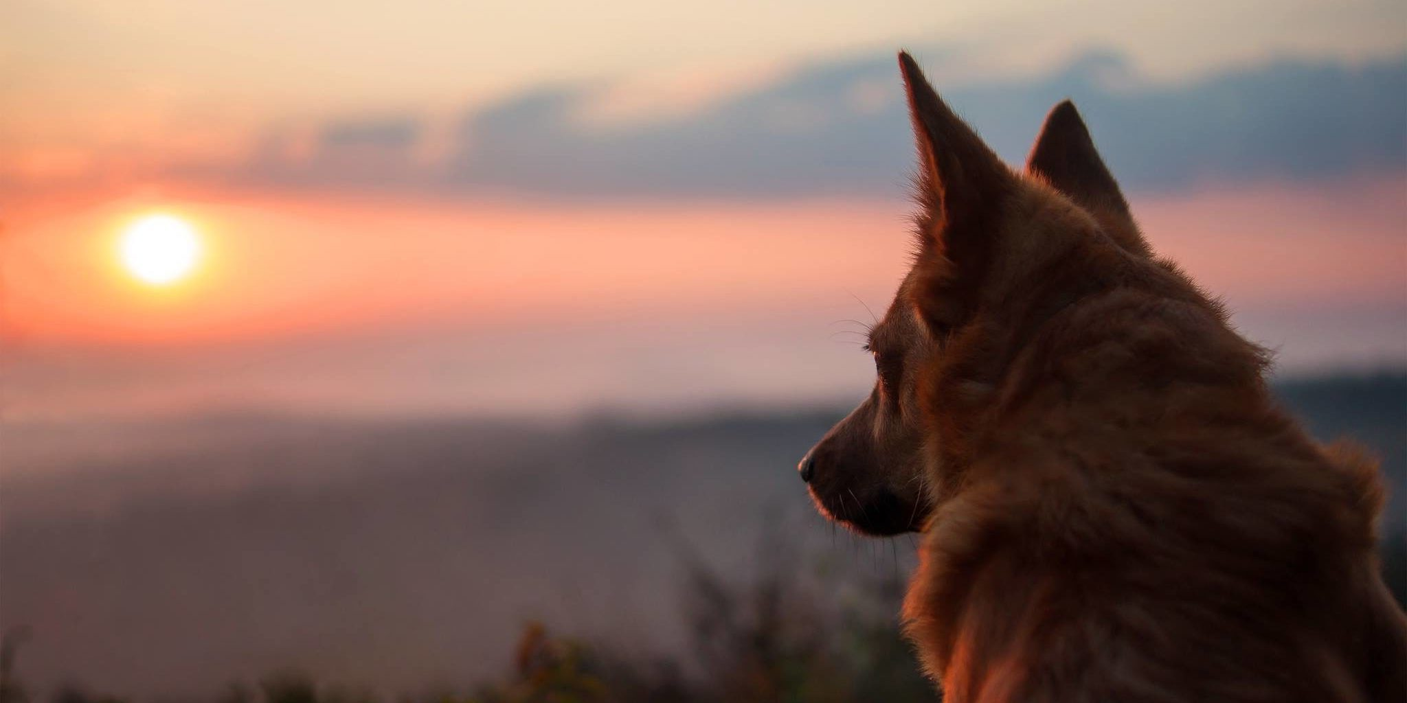 Pies na miarę swoich możliwości